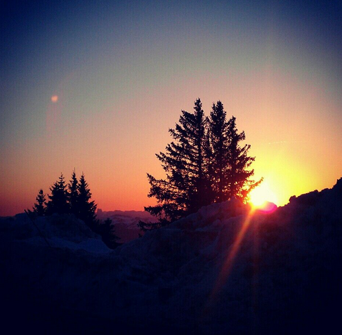 Sapin au coucher du soleil
